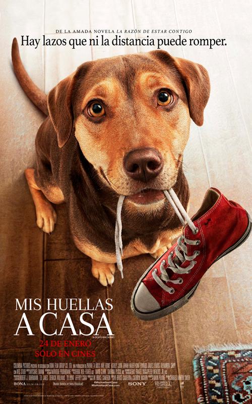 https://www.andesfilms.com.pe/mis-huellas-a-casa/